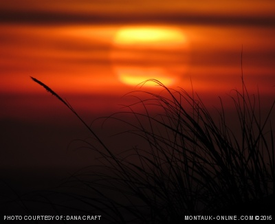 Spectacular sunset through beach grass in Montauk, NY